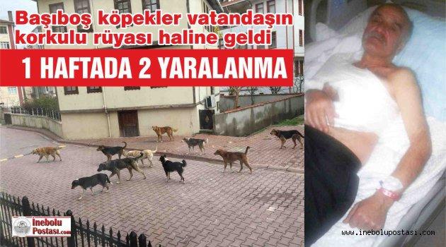Başıboş Köpekler 2 Kişinin Yaralanmasına Sebep Oldu