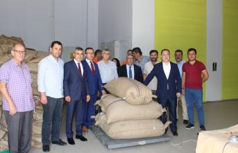 Toprak Mahsulleri Ofisi İnebolu'da ilk kez fındık alımına başladı
