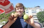 Yumurta Büyüklüğünde Organik Ceviz Pazarda Büyük Talep Görüyor
