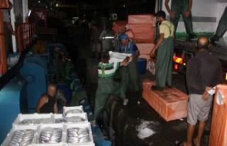 Balıkçılar İnebolu Limanına kasa kasa palamutla...