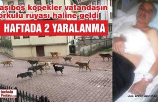 Başıboş Köpekler 2 Kişinin Yaralanmasına Sebep...