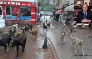 Uzuner'den 'Sokak Hayvanları' açıklaması