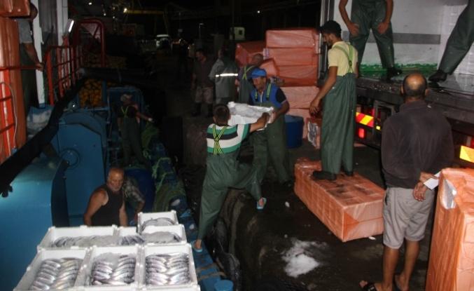 Balıkçılar İnebolu Limanına kasa kasa palamutla döndü