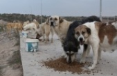 Belirlenen yerler dışında sokak hayvanlarının beslenilmesi yasaklandı