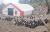 Çiftlikten horoz ve tavuk çaldılar