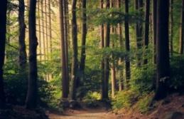 Valilik'ten orman yasağı